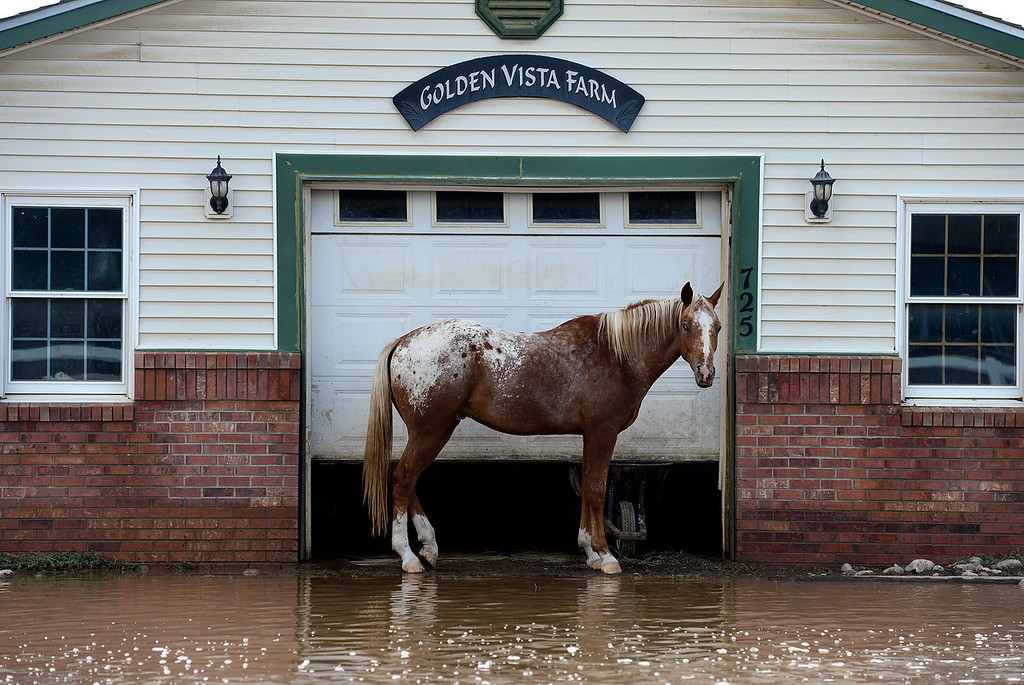 Description of . A horse stands next to a shed surrounded by water along Fordham Street Saturday afternoon, Sept. 14, 2013. The horses owner did not evacuate and was able to take care of it. (Lewis Geyer/Times-Call)