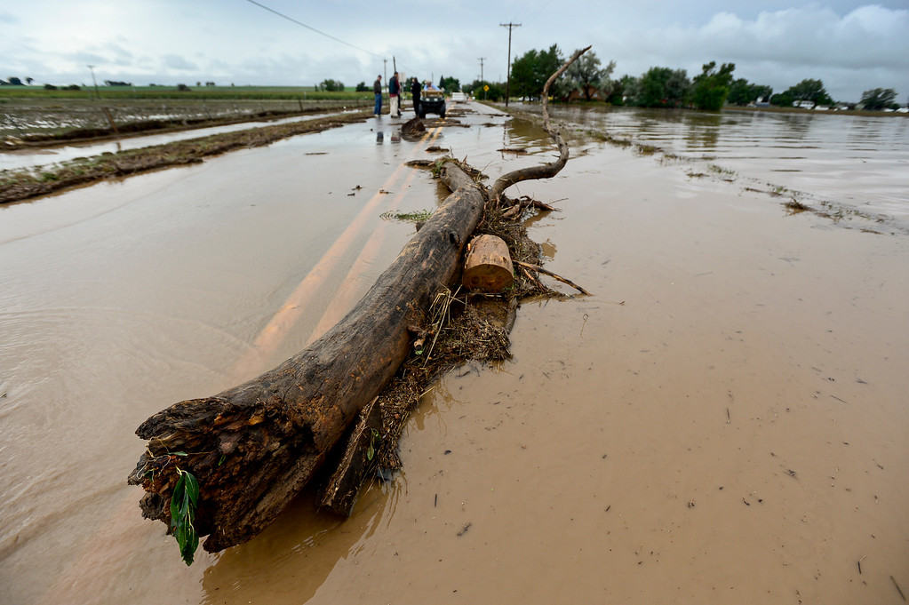 Description of . A 10 to 15 foot long tree branch sits on a flooded section of North 119th Street, Friday, Sept. 13, 2013, in Longmont.