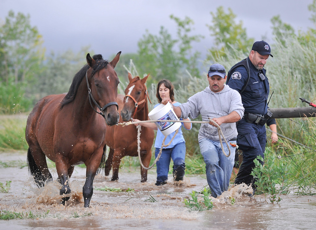 Description of . Alberto, no last name given, center, Laura Hughes, of Hygiene, left, and Boulder County Sheriff\'s deputy Mitchell Rosebrough work to free a pair of horses from flood water near Hygiene Road and North 75th, Thursday, Sept. 12, 2013, near Hygiene.