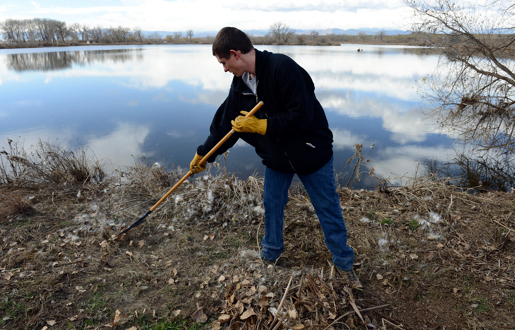 Description of . Volunteer Kevin Smith, of Fort Lupton, rakes together flood debris at Pelican Pond in St. Vrain State Park Saturday Nov. 16, 2013. (Lewis Geyer/Times-Call)