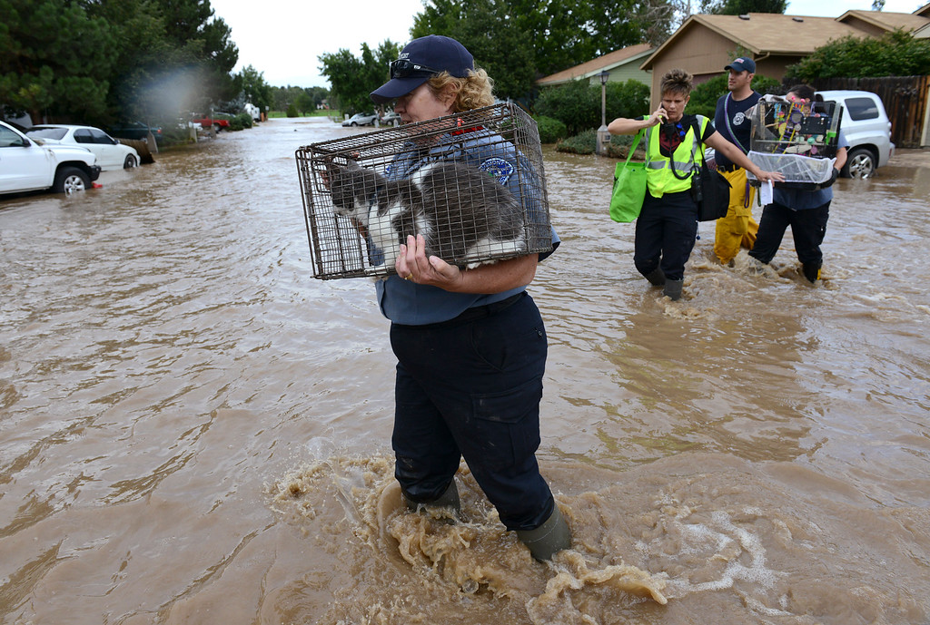 . Longmont animal control officer Diane Milford carries a cat taken from an evacuated home across a flooded Hayden Court Saturday afternoon, Sept. 14, 2013. (Lewis Geyer/Times-Call)