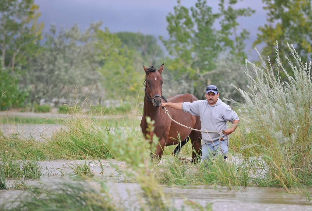 . Alberto, no last name given, works to free a horse from flood waters near Hygiene Road and North 75th, Thursday, Sept. 12, 2013, near Hygiene. (Matthew Jonas/Times-Call)